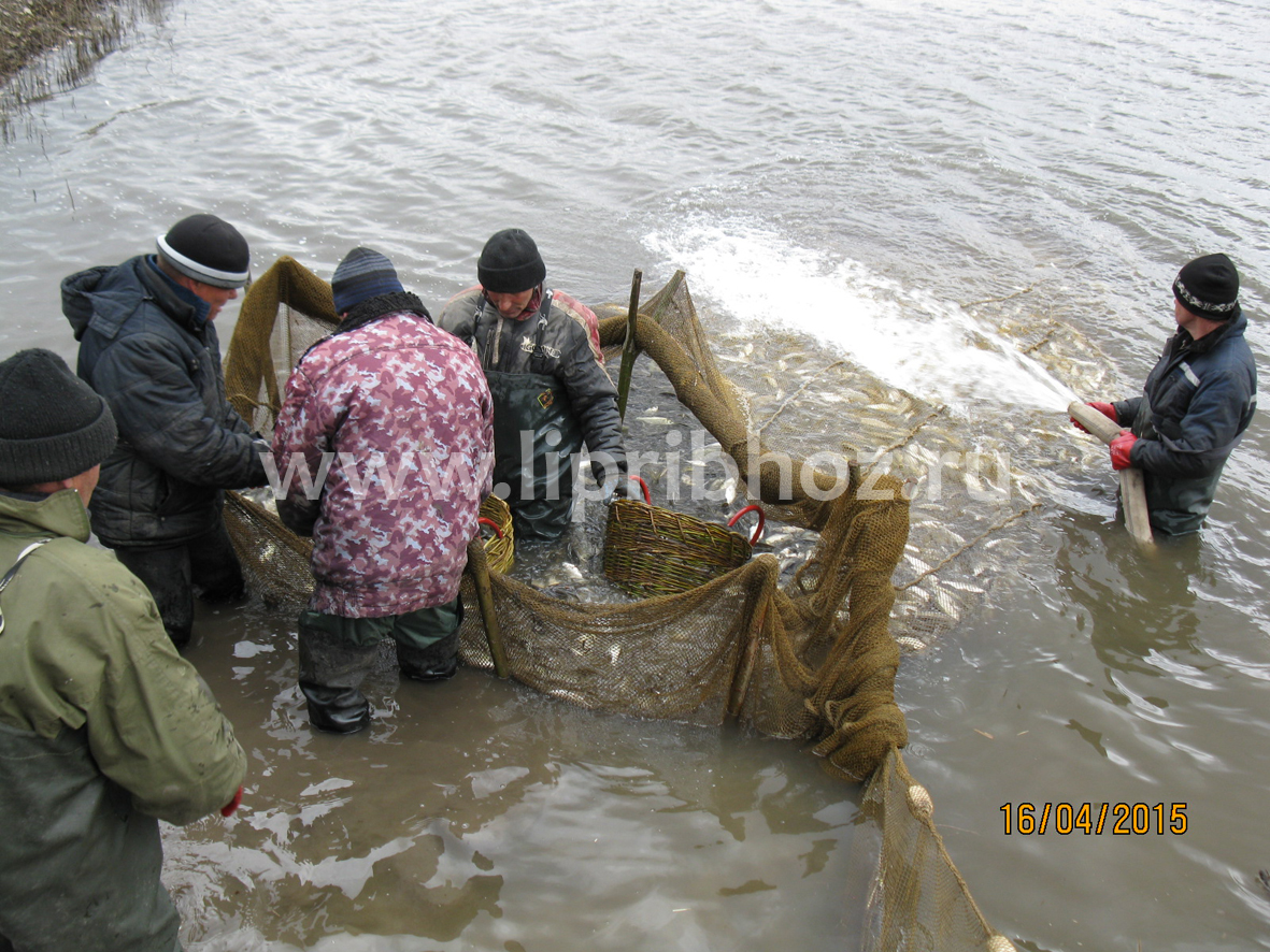 рыболовное хозяйство в ростове